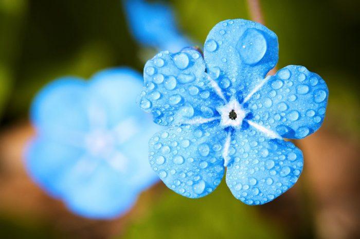 Lluvia flor