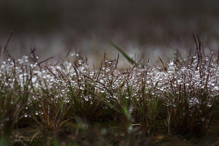 lluvia cesped
