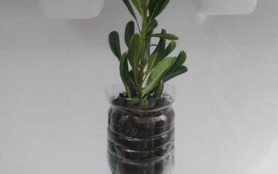 Macetas 'autorriego' para que tus plantas sobrevivan